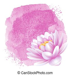 Water lily - Vector beautiful pink water lily or lotus...