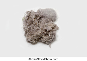 Bunny of dust