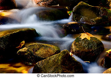 autumn rivulet - rivulet in autumn with yellow leaf on stone