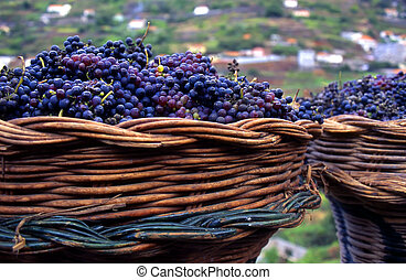 purple grapes - basket with purple grapes used for...