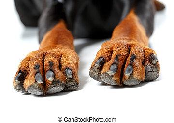 perro, frente, piernas, Arriba, cierre