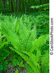Floral background with Common Lady Fern - Fern in the...