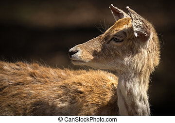 Close Up of Young Deer Looking Behind Itself