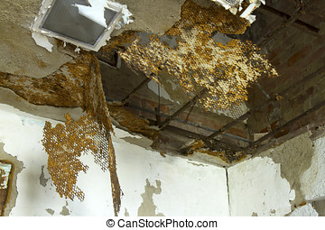 Building in decline - Ceiling rusting and falling in a...