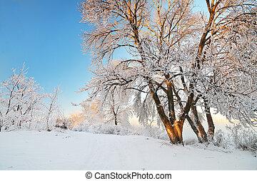 Rime landscape - Rime on trees Nature composition