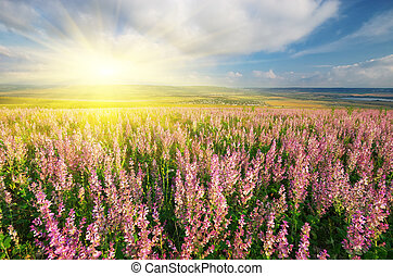 Spring meadow of flowers Composition of nature