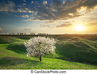 Spring tree in mountain meadow. Nature composition.