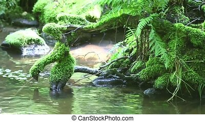 Roots In The Water - Detail of the roots in the stream