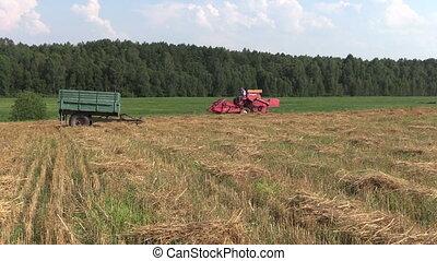 tractor in field - red farm tractor work in village field....