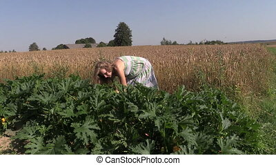 farmer harvest zucchini - Pregnant peasant woman in dress...