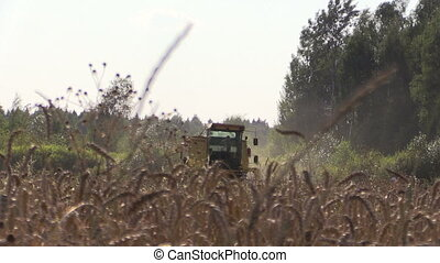 agriculture field harvest