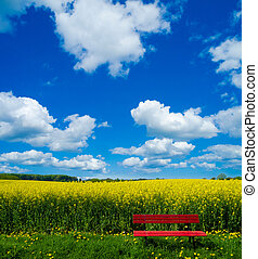 red bench in front of blooming canola field - Spring...