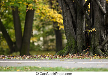 Lovely nature background - autumn/Fall in a park