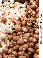 Colour image of Fresh white mushrooms - Colour image of many...