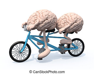 brains riding tandem bicycle - two human brains with arms...
