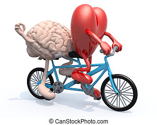 brain and heart riding tandem bicycle - human brain and...