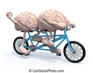 two brains riding tandem bicycle - two human brains with...