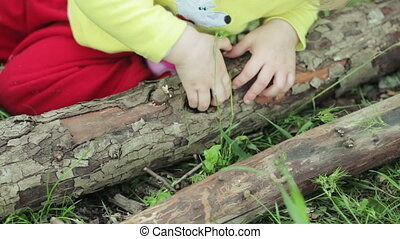 Child picks his log - Girl child in nature is played stick