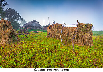 Haymaking in a Carpathian village. Ukraine, Europe