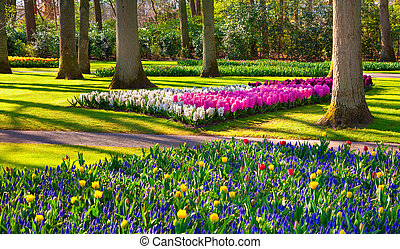 Marvellous flowers in the Keukenhof park Beautiful outdoor...