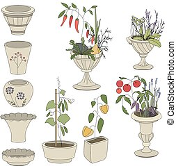 Flower pots with vegetables - herbs,pepper,cucumber isolated...