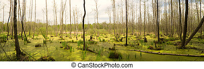 Bog in wood. Polesye, Ukraine.