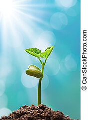 plant with sunlight - sprout with sunlight shining on it