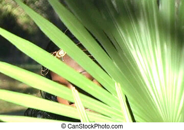 Beautiful Woman Behind a Palm Frond - Closeup of a beautiful...