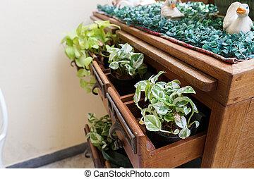 rysownik, roślina, biurko