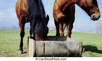 horses on watering-place - Countryside, farming. Horses...