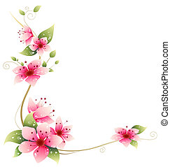 Sakura - drawing of beautiful sakura flower in a white...