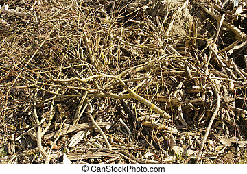 Brushwood - The close-up of twigs and stranded Driftwood on...