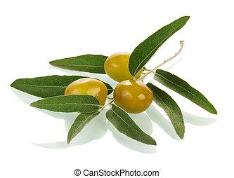 Olives twig - Olives on twig isolated on white background