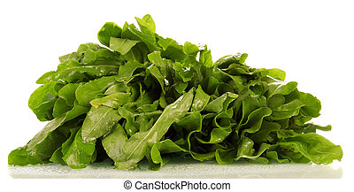 bunch of fresh sorrel isolated on white background