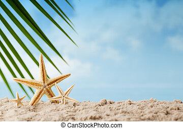 Sea stars.