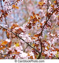 primavera, sakura, flor,