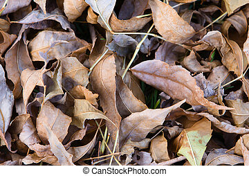 Dry Fallen Autumn Leaves Background