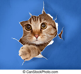 cat in blue chromakey paper hole - cat in blue chromakey...