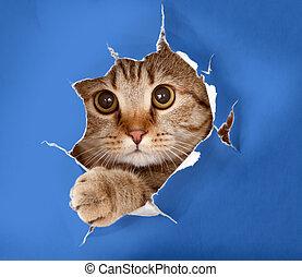 gato, en, azul, chromakey, papel, hole, ,