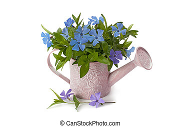Watering pot with spring flowers - watering pot spring...