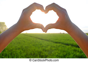 Heart symbol against the beautiful sunshine and field