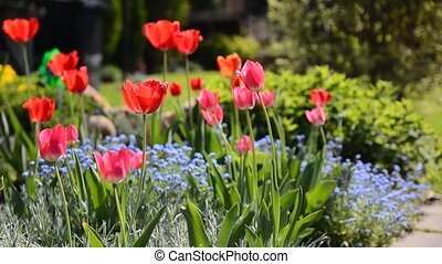 Red tulips in flowerbed - The red tulips in the colorful...