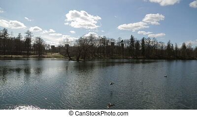 Picturesque landscape lake in Gatchina, town near Saint...