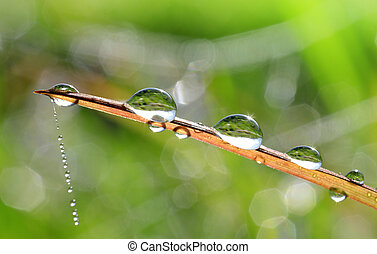 dew drop - Fresh grass with dew drop closeup. Nature...