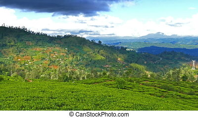 mountain landscape with tea plantation