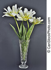Three delicate tulips - Three white with yellow delicate...