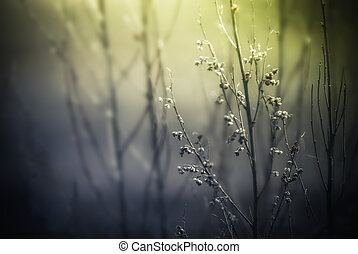 Abstract nature background with wild flowers and plants silhouettes at foggy mysterious sunrise