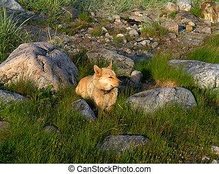 Dog between the stones