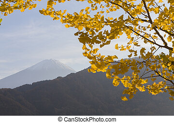 Ginkgo leaves and Mt.Fuji, Japan - This photo was shot from...