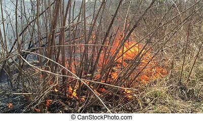 Fire rages in long grass, foreground